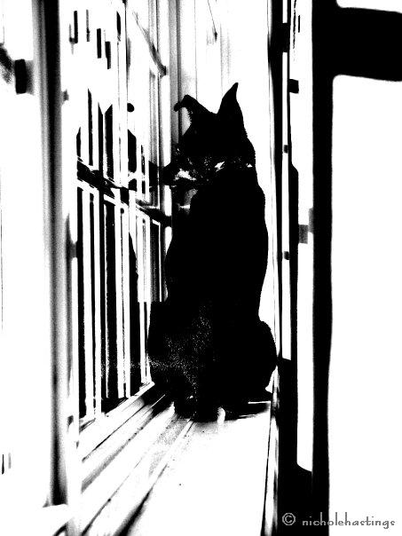 """""""Max Cat"""" photographed by Nichole Hastings"""